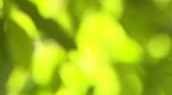 Embedded thumbnail for Футаж Солнечные Лучи в Листьях скачать бесплатно